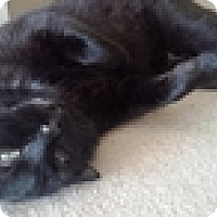 Adopt A Pet :: Kuro - Vancouver, BC