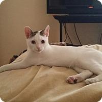 Adopt A Pet :: Theodore - Laguna Woods, CA