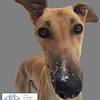 Adopt A Pet :: Crimson - Swanzey, NH