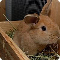 Adopt A Pet :: Bun Solo and Sky Hopper - Williston, FL