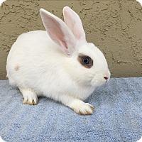 Adopt A Pet :: Tanya - Bonita, CA