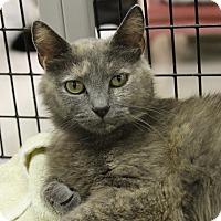 Adopt A Pet :: Taffy - Medina, OH