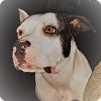 Adopt A Pet :: Destini - Rowlett, TX