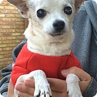 Adopt A Pet :: Cutie Pie - Lafayette, LA