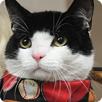 Adopt A Pet :: SNICKERS - Clayton, NJ
