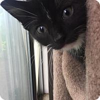 Adopt A Pet :: McCoy - Cincinnati, OH