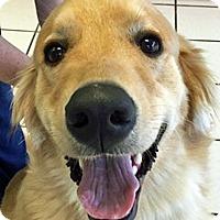Adopt A Pet :: Vincent - BIRMINGHAM, AL