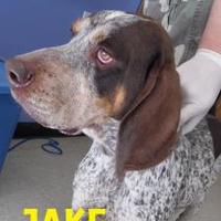 Adopt A Pet :: JAKE - Franklin, NC