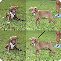 Adopt A Pet :: Briggs 💚 fostered in NE 8/05! - Allentown, PA