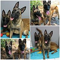 Adopt A Pet :: Ava & Elwood - Forked River, NJ