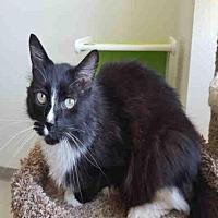Adopt A Pet :: TEDDY BEAR - Fairfield, CA