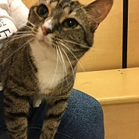 Adopt A Pet :: Dorika - Grand Ledge, MI