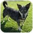 Photo 2 - Australian Cattle Dog Mix Dog for adoption in San Clemente, California - LILLY