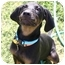 Photo 4 - Black and Tan Coonhound Mix Puppy for adoption in Auburn, California - Maddie