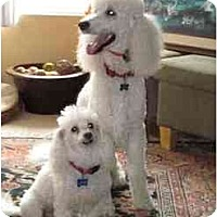 Adopt A Pet :: Bridgett & Louie - spring valley, CA