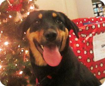 Rottweiler Mix Dog for adoption in Lloydminster, Alberta - Terra