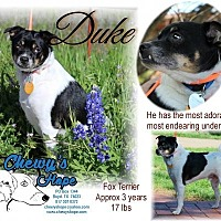 Adopt A Pet :: Duke - Boyd, TX