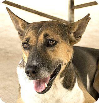 Hound (Unknown Type)/Terrier (Unknown Type, Medium) Mix Dog for adoption in Pickering, Ontario - Linda
