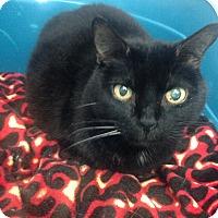Adopt A Pet :: Hesos - Newport Beach, CA