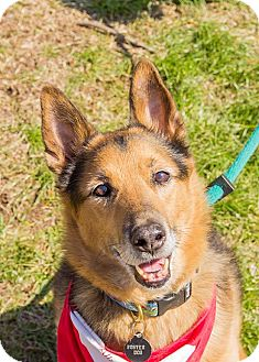 German Shepherd Dog Mix Dog for adoption in Baltimore, Maryland - Uncle Buck