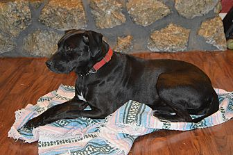 Labrador Retriever Mix Dog for adoption in Broken Arrow, Oklahoma - Heather