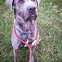 Adopt A Pet :: Marilyn - Chambersburg, PA