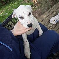 Adopt A Pet :: Cotton - Summerville, SC