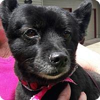 Adopt A Pet :: Hayley - Salem, OR