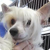 Adopt A Pet :: Squiggy - Lakeland, FL