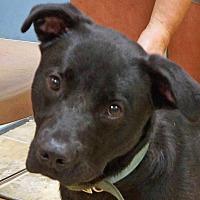 Adopt A Pet :: Zeus - Sprakers, NY