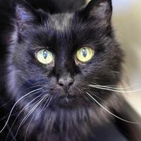 Adopt A Pet :: Shadow - Ponderay, ID