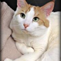 Adopt A Pet :: Ace - Crossfield, AB