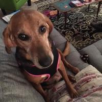 Adopt A Pet :: Elsa - Glen Allen, VA