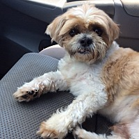 Adopt A Pet :: Broady - San Antonio, TX