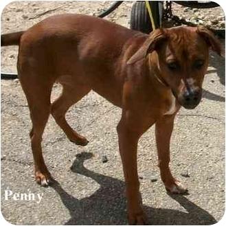 Labrador Retriever Mix Dog for adoption in Slidell, Louisiana - Penny