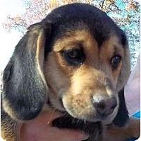 Adopt A Pet :: Wamo - Plainfield, CT
