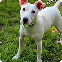 Adopt A Pet :: Chloe - Tinton Falls, NJ