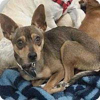 Adopt A Pet :: Skywalker - Phoenix, AZ