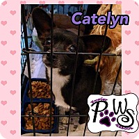 Adopt A Pet :: Catelyn - Fowler, CA