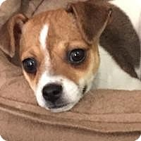 Adopt A Pet :: Elsa Frozen - Shawnee Mission, KS
