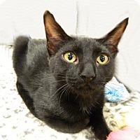 Adopt A Pet :: Dash - The Colony, TX