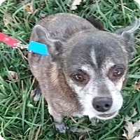 Adopt A Pet :: Tuffy - Macomb, IL