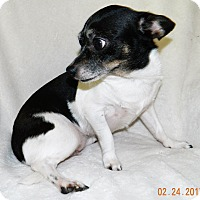 Adopt A Pet :: Elsie - Umatilla, FL