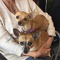 Adopt A Pet :: Leggs - Scottsdale, AZ