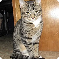Adopt A Pet :: Alastor - Norwich, NY