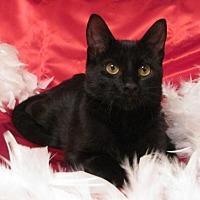 Adopt A Pet :: Pepper - St. Louis, MO