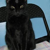 Adopt A Pet :: Mandu - New Kensington, PA