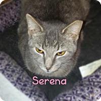 Adopt A Pet :: Serena - York, PA