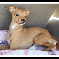 Adopt A Pet :: PERRY - Winchester, CA