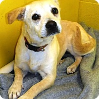 Adopt A Pet :: Betsy - Redding, CA
